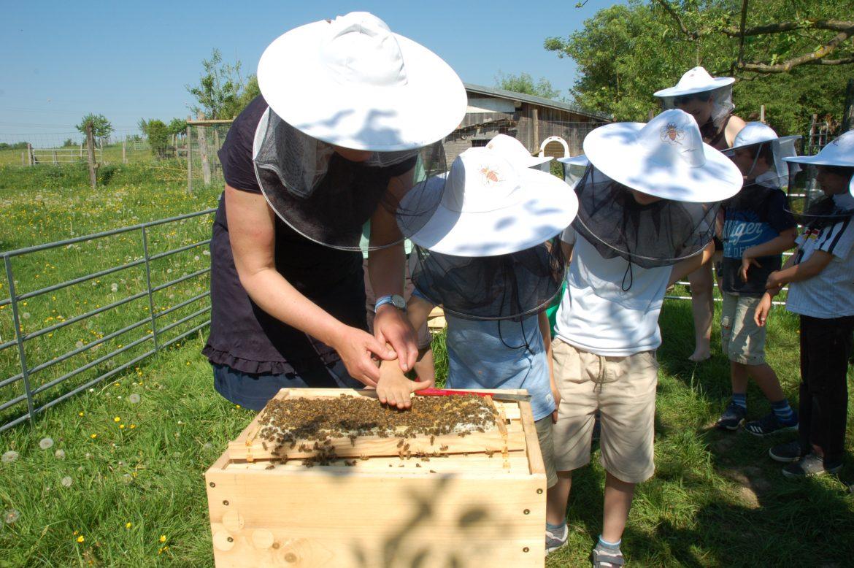 Wer traut sich, die Hand auf Honigbienen zu legen?